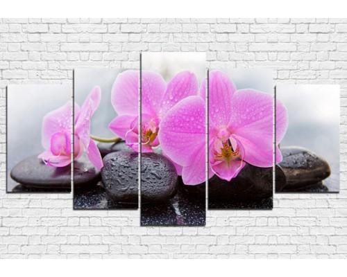 Цветы орхидеи № 0002ЦО