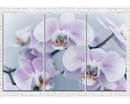 Цветы орхидеи № 0007ЦО