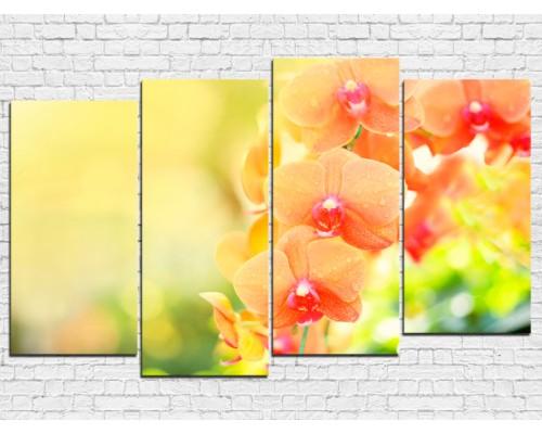 Цветы орхидеи № 0012ЦО