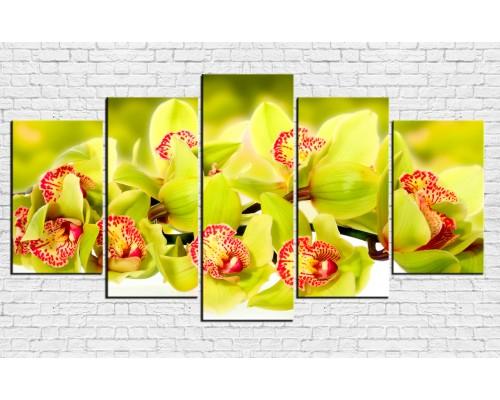Цветы орхидеи № 08013ЦО