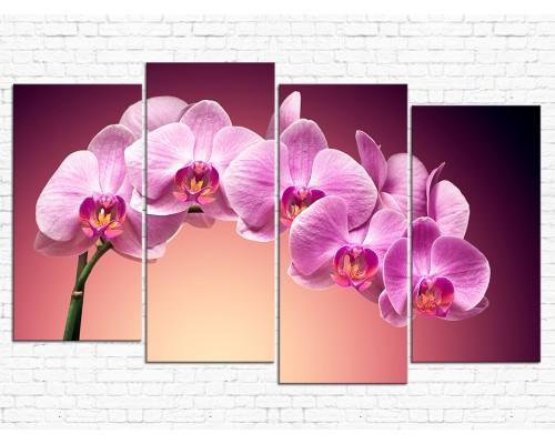 Цветы орхидеи № 08046ЦО