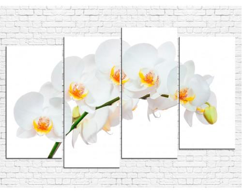 Цветы орхидеи № 08048ЦО