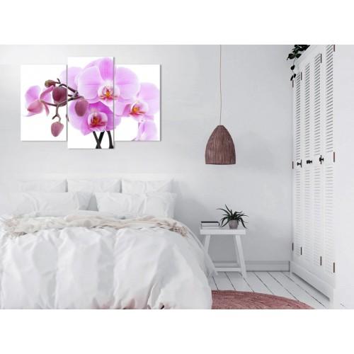 Цветы орхидеи № 5106ЦО