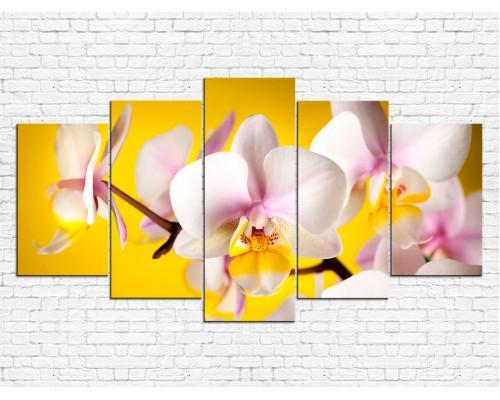 Цветы орхидеи № 529ЦО