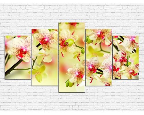 Цветы орхидеи № 8006ЦО