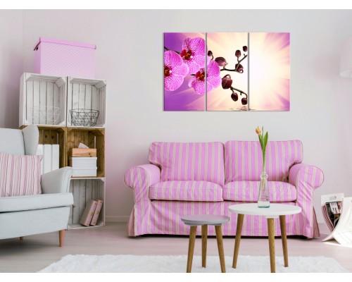 Цветы орхидеи № 8022ЦО
