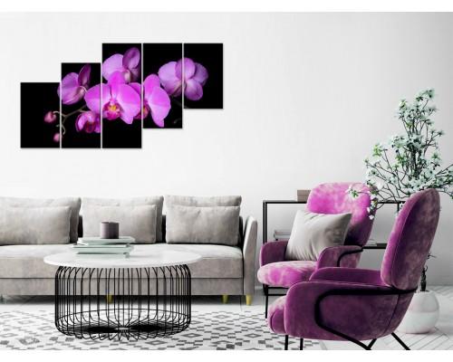 Цветы орхидеи № 871ЦО