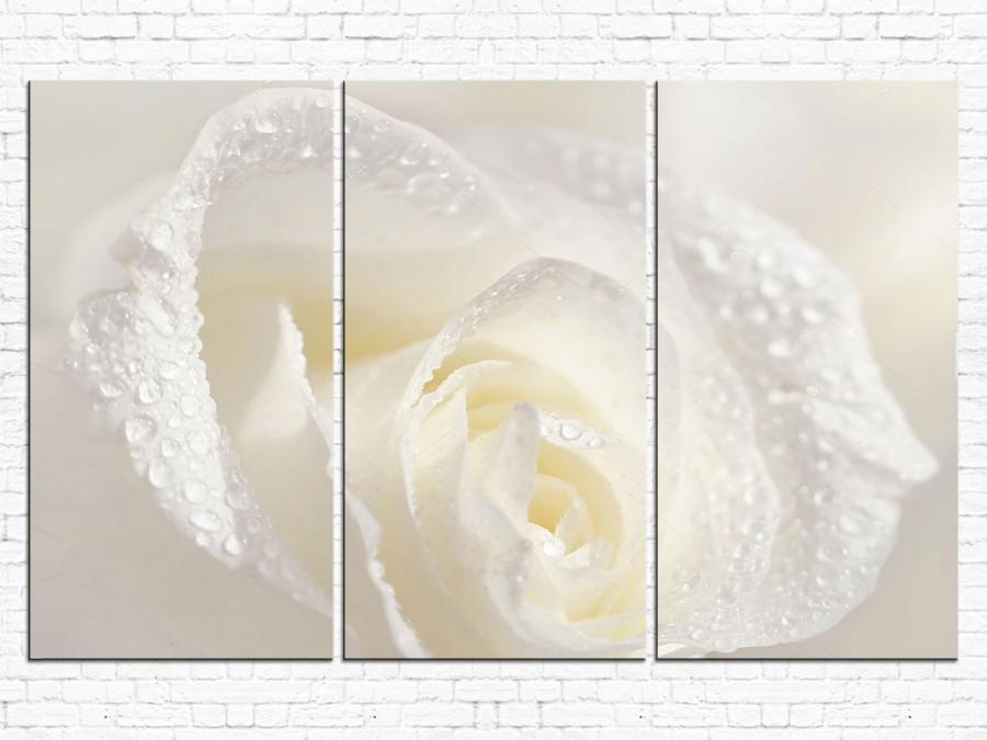 Цветы Розы № 0001ЦР
