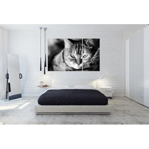 Модульная картина кошки № 6517Ж