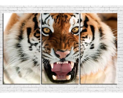 Модульная картина Тигр № 0001ЖТ