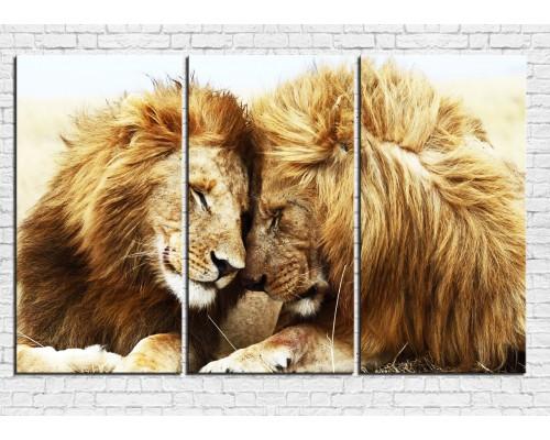 Модульная картина Лев №  0004ЖЛВ